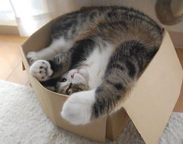 Verhuis uw kat